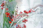 Frozen vivid bouquet with berries inside the ice block 2 — Stock Photo