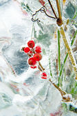 Frozen bouquet with red berries inside the ice block — Stock Photo