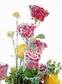 Frozen bouquet of red and yellow roses in the ice block detailed — Stock Photo