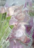 Frozen pastel pink flowers 2 — Zdjęcie stockowe