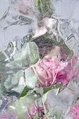 Frozen pastel pink flowers — ストック写真
