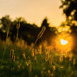 The evening sun in the park — Stockfoto