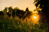 The evening sun in the park — Stock Photo