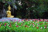Buddha in a field of tulips — Stock Photo
