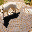 Yin-Yang Zen Dog Black White Taoism — Stock Photo #37920587
