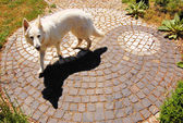 Yin-Yang Zen Dog Black White Taoism — Stock Photo