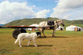 Dog and Horse in front of Mongolian yurts — Stock Photo