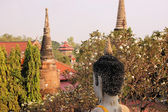 Buddha head and blooming cherries, Ayutthaya — Foto de Stock