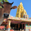 Sacred cow in front of Hindu temple, Sri Lanka — Stock Photo #45021177