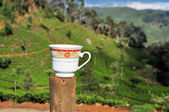 Tea cup plantation nature landscape in Sri Lanka — Stock Photo