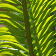 Tree fern — Stock Photo #38101549