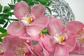 Orquídea phalaenopsis coral — Fotografia Stock