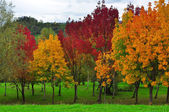 Autumn in Basuri. Biscay. Spain. — Stock Photo