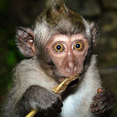 Frightened monkey — Stock Photo