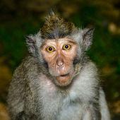 Naive monkey — Stock Photo