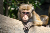 Monkey sitting on a tree branch — Stock Photo
