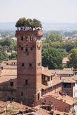 Guinigi Tower — Stock Photo