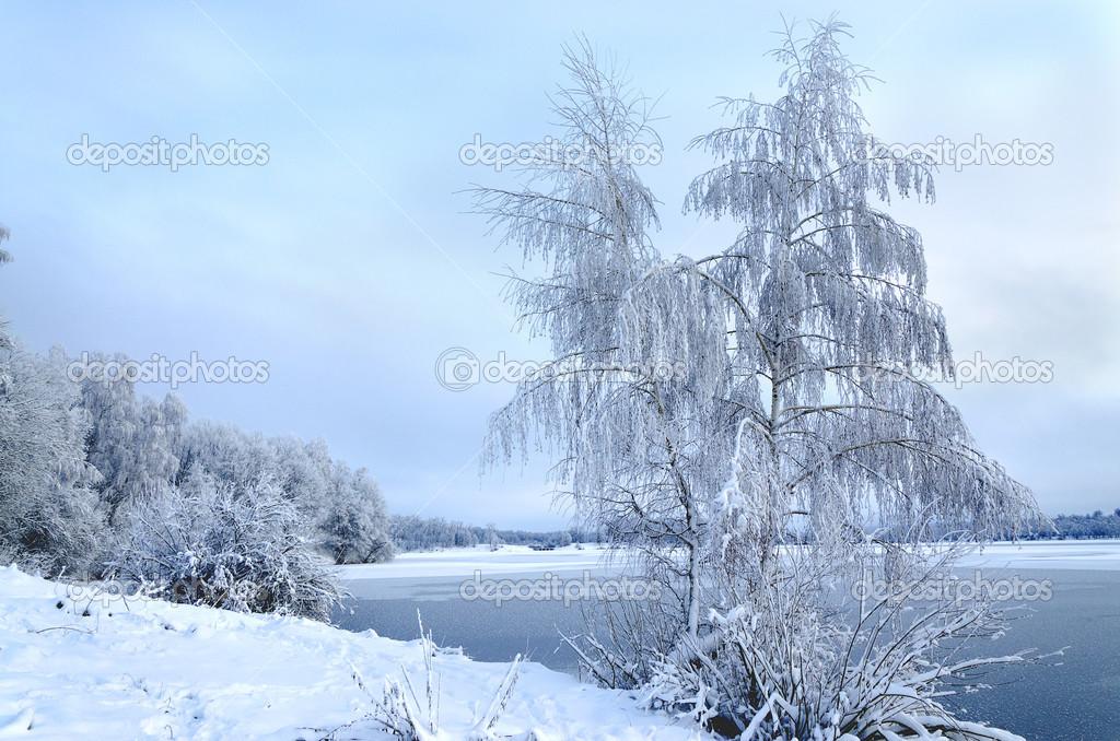 Paesaggio invernale con alberi coperto di brina e lago for Disegni paesaggio invernale