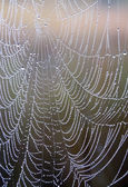 Web-closeup - necklace drops — Stockfoto