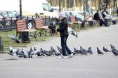 Girl five years feeds pigeons — Stock Photo