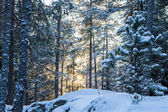 Backlit winter scene — Stock Photo