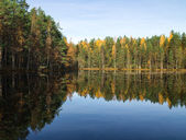 Mirroring forest lake — Stock Photo
