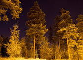 Dark forest in the night — Stock Photo