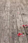 Fallen petals — Stock Photo