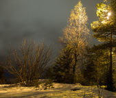 Winter night — Stockfoto