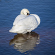 Swan in the blue ocean — Stock Photo #44549117