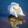 Swan in the blue ocean — Stock Photo #44549127