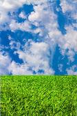 зеленая трава и синее небо облачно — Стоковое фото