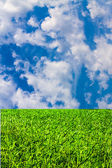 Green grass and blue cloudy sky — Stock Photo