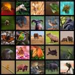 Animals Collage — Stock Photo