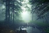 Fantasy las — Zdjęcie stockowe