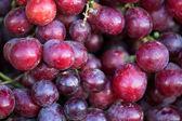 Red grape — Stock Photo