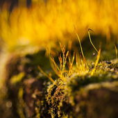 Moss flowers background — Stock Photo