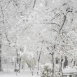 Snowing landscape in park — Stock Photo #37449803
