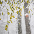 Snow on branches while snowing — Stock Photo #37449829