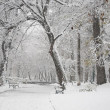 Snowing landscape in park — Stock Photo #37449855