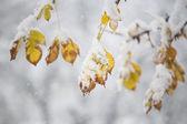 Galhos de árvore na neve — Foto Stock