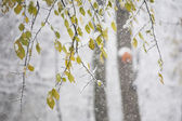 Snow on the branches while snowing — Stock Photo