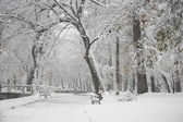 Snowing landscape in the park — ストック写真