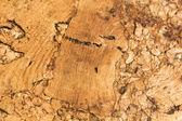 Cork texture background — Stock Photo