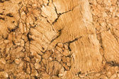 Cork texture background — Stock Photo