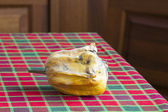 Withered scallop squash — Stock Photo