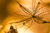Abstract composition with dandelion seed — Stok fotoğraf