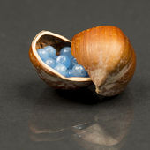 Hazelnut shell with small blue and transparent gemstones — Stock Photo