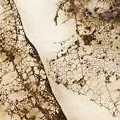 Filigree abstract — Stock Photo