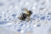 Dead bee on the pastic surface — Foto de Stock